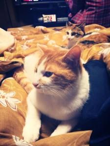 みやこさん家の猫
